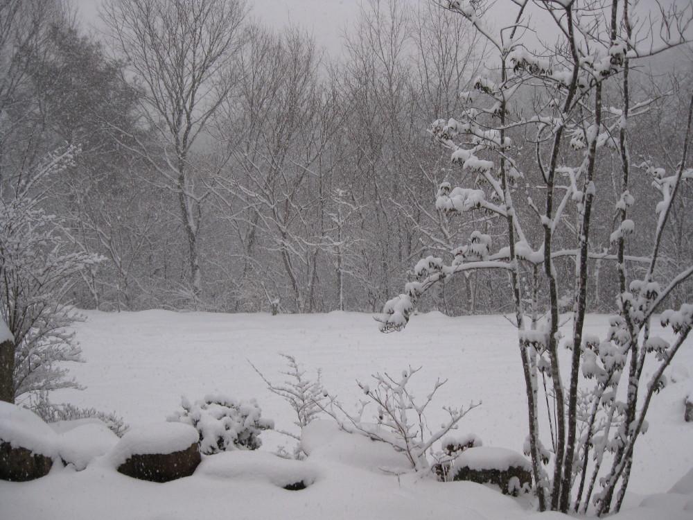 今朝も冷えました~。_c0218213_17464944.jpg