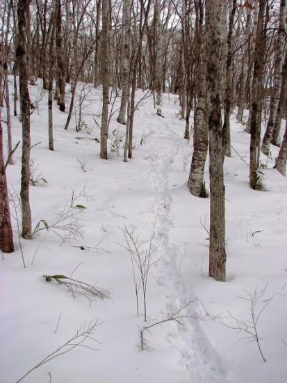 2011年1月16日(日):真冬日は続く_e0062415_208502.jpg