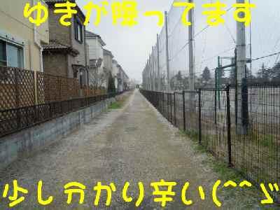 c0166622_2044132.jpg