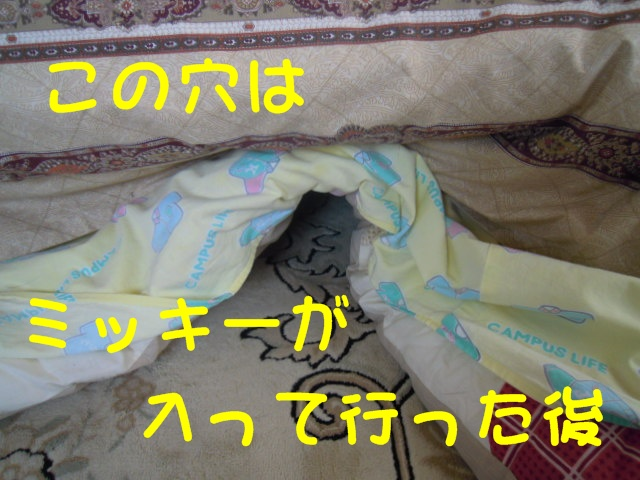 c0166622_20514763.jpg