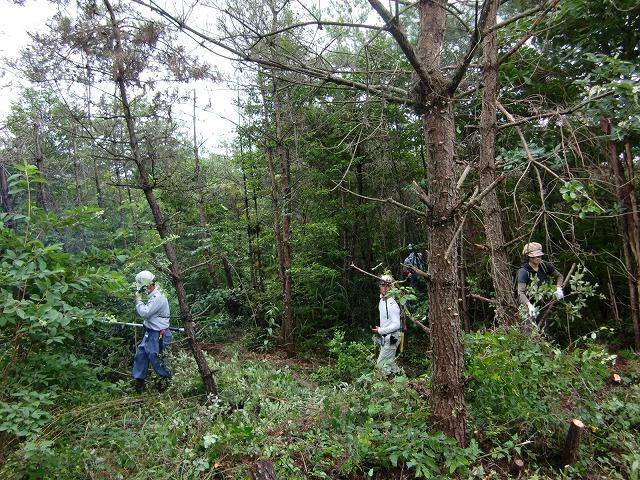 講座の案内 「里山の森再生」_a0084930_16234763.jpg