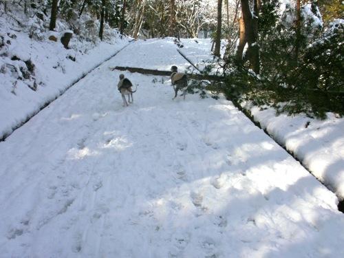 snow snw snow!_a0197730_23373379.jpg