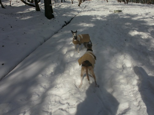snow snw snow!_a0197730_23443195.jpg
