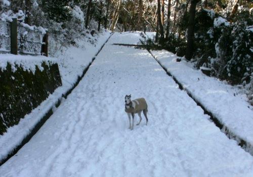 snow snw snow!_a0197730_2354522.jpg