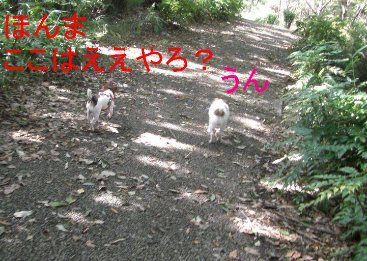 f0053952_1311313.jpg
