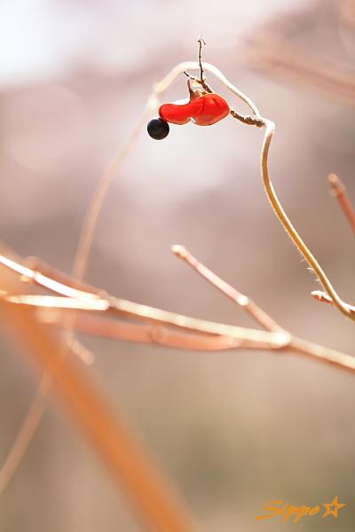 ■■ Heart in leaf ■■_c0195662_2341316.jpg