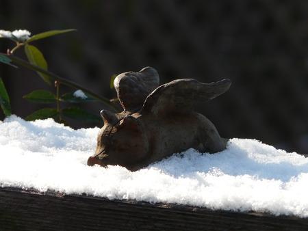 初雪♪♪♪_d0168170_10555062.jpg
