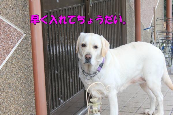 b0136683_12104678.jpg