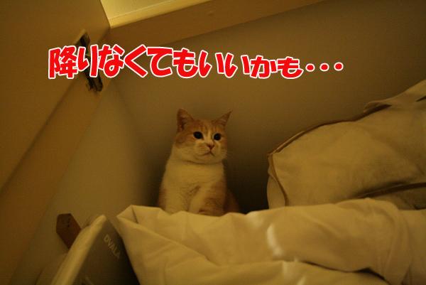 f0068385_2405069.jpg