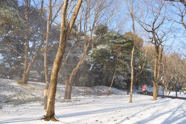 雪のペンキ屋さん_a0126590_2243782.jpg