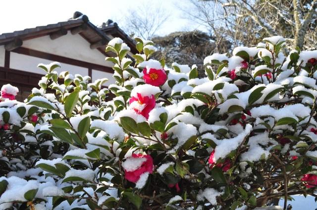雪のペンキ屋さん_a0126590_2244522.jpg