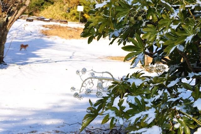 雪のペンキ屋さん_a0126590_22461877.jpg