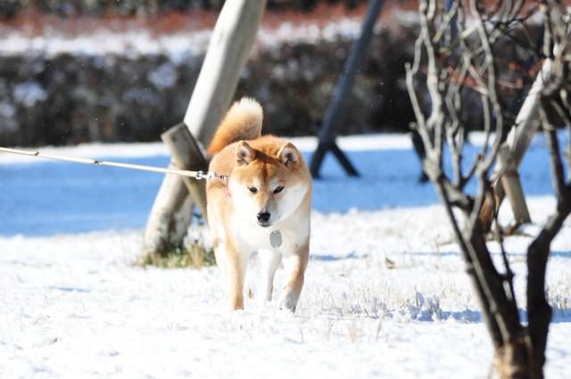 雪のペンキ屋さん_a0126590_22495963.jpg