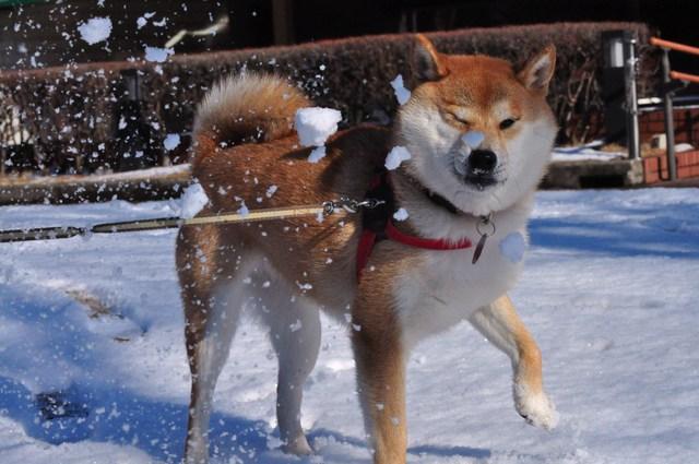 雪のペンキ屋さん_a0126590_2254750.jpg