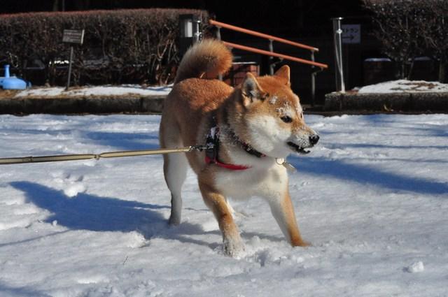 雪のペンキ屋さん_a0126590_2313816.jpg
