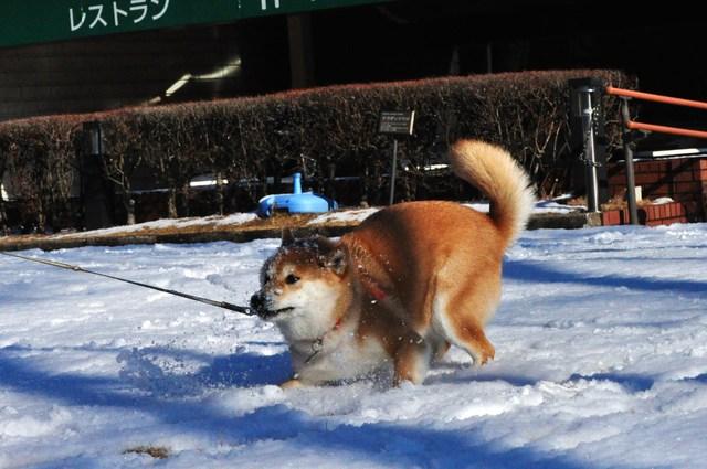 雪のペンキ屋さん_a0126590_23153850.jpg