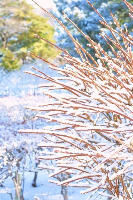 雪のペンキ屋さん_a0126590_2341762.jpg