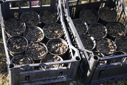 2011年種まき初め~1月の畑_f0106597_4255124.jpg