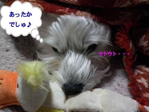 コタツとみかん♪_a0161111_14721100.jpg