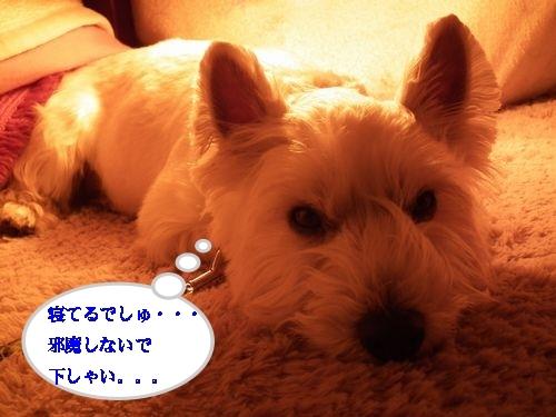 コタツとみかん♪_a0161111_1494848.jpg