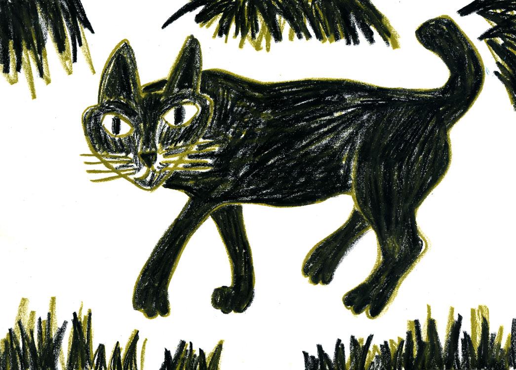月光浴→黒猫_a0048227_2340226.jpg
