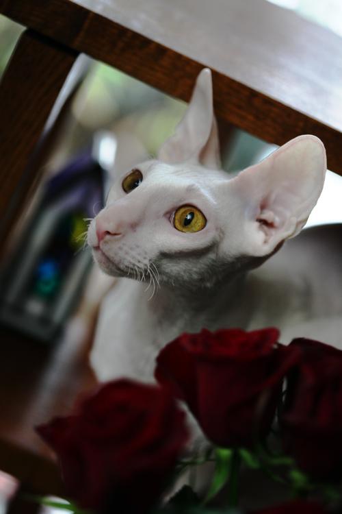 20年分の薔薇・・・_e0048332_018425.jpg