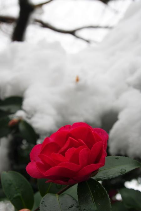 雪の日泰寺_d0145934_1343397.jpg