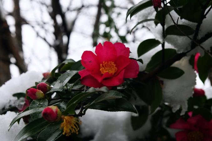 雪の日泰寺_d0145934_134555.jpg