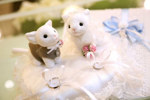 猫ウェディングまとめ☆_f0108346_13284851.jpg