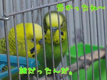 f0196665_0505798.jpg