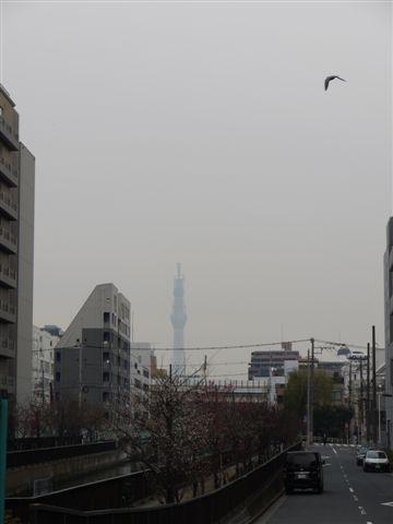 門前仲町から日本橋、てくてく歩いて♪d(´▽`)b♪_b0175688_16303538.jpg