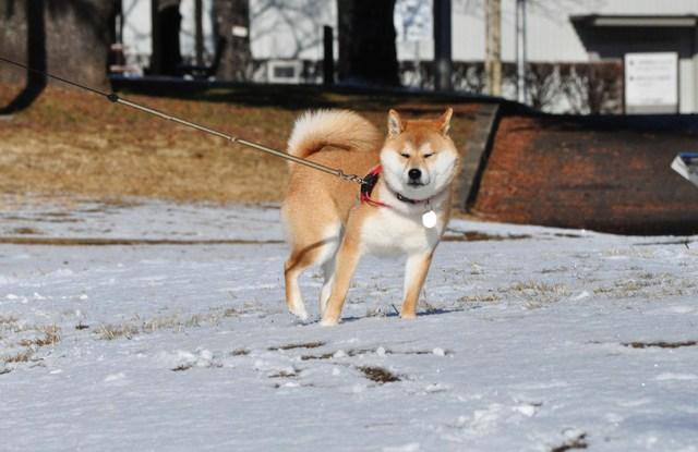 雪のペンキ屋さん_a0126590_011817.jpg