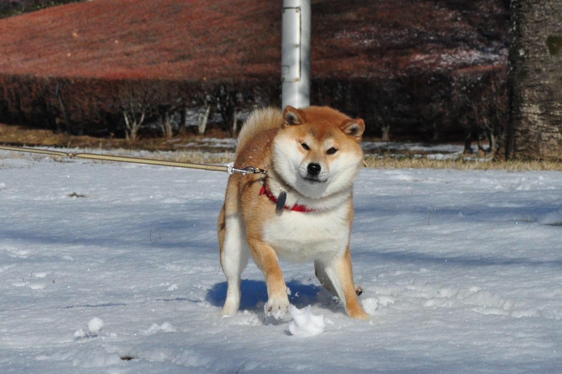 雪のペンキ屋さん_a0126590_032074.jpg
