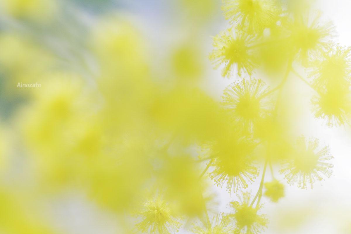 黄色い夢_b0103798_2317095.jpg