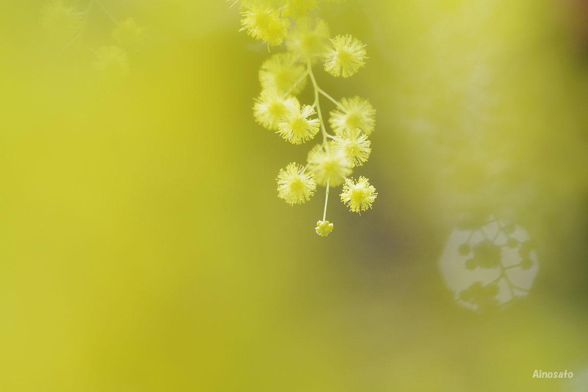 黄色い夢_b0103798_2317825.jpg