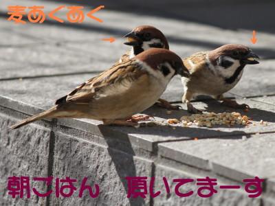 b0158061_2140486.jpg