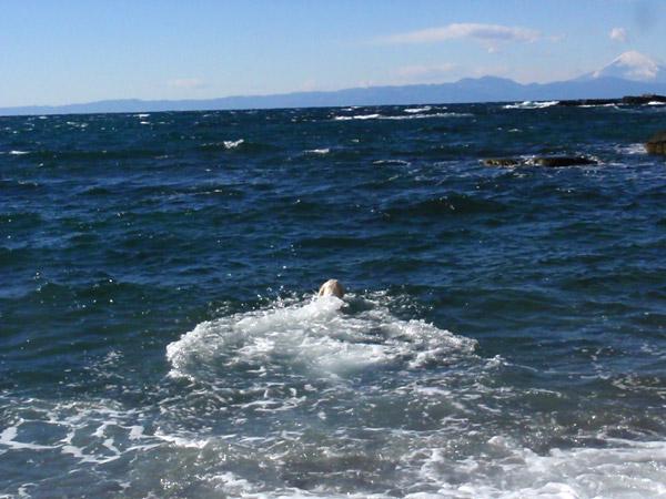 寒中水泳大会!_c0110361_11315275.jpg