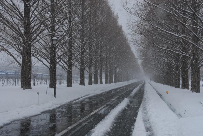 雪三昧♪ part3_a0049296_2191744.jpg