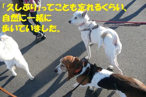 f0121712_1464535.jpg