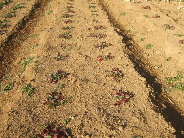 寒お起こし.....今年初の農作業!_b0137932_14261479.jpg