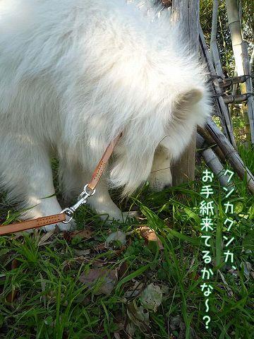 平日のお散歩_c0062832_19532827.jpg