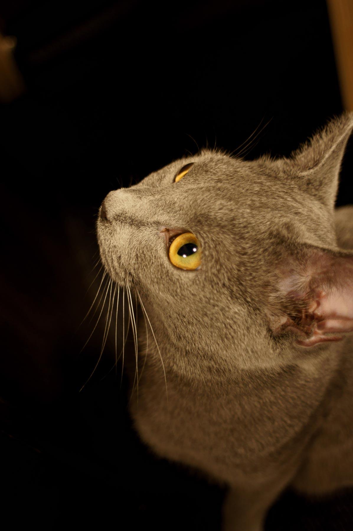AF24mmF2.8で猫写真_e0216133_22541511.jpg