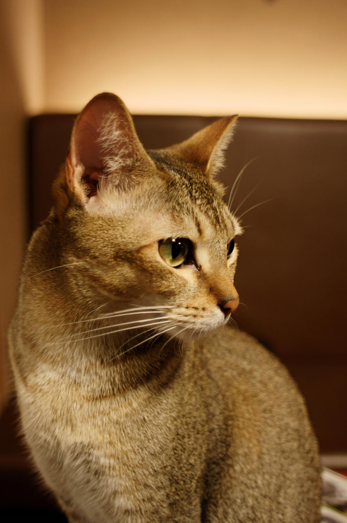 AF24mmF2.8で猫写真_e0216133_22542384.jpg