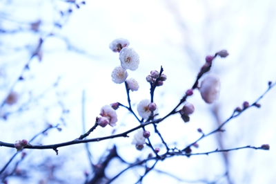 大寒、、、_a0133859_16413093.jpg