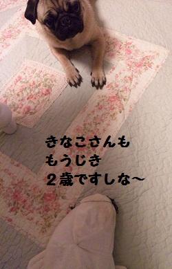 b0197865_2043276.jpg