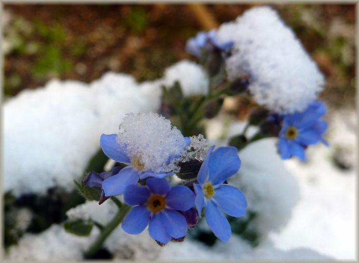冷たい朝_b0093088_845140.jpg