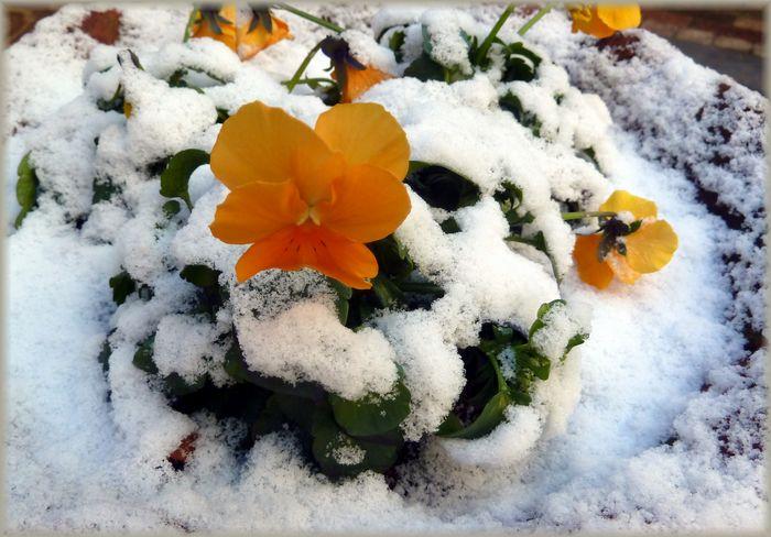 冷たい朝_b0093088_8451423.jpg