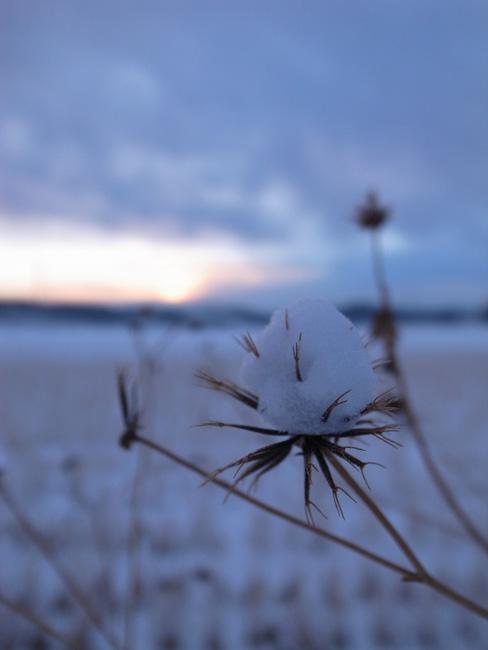 Winterdays_f0137626_22313734.jpg