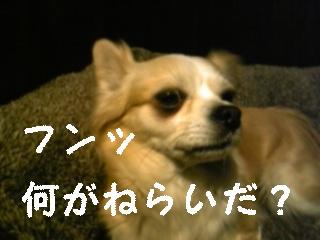 f0148927_22241372.jpg