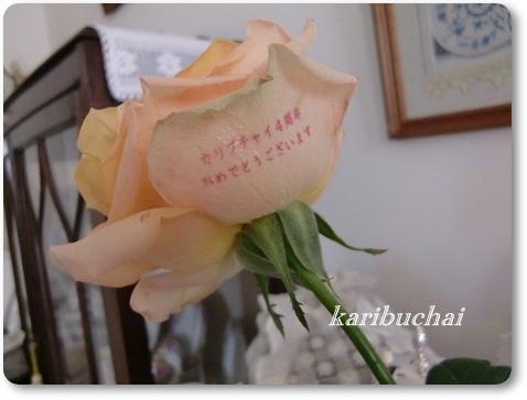 あの薔薇 … その後 …_c0079828_0221412.jpg